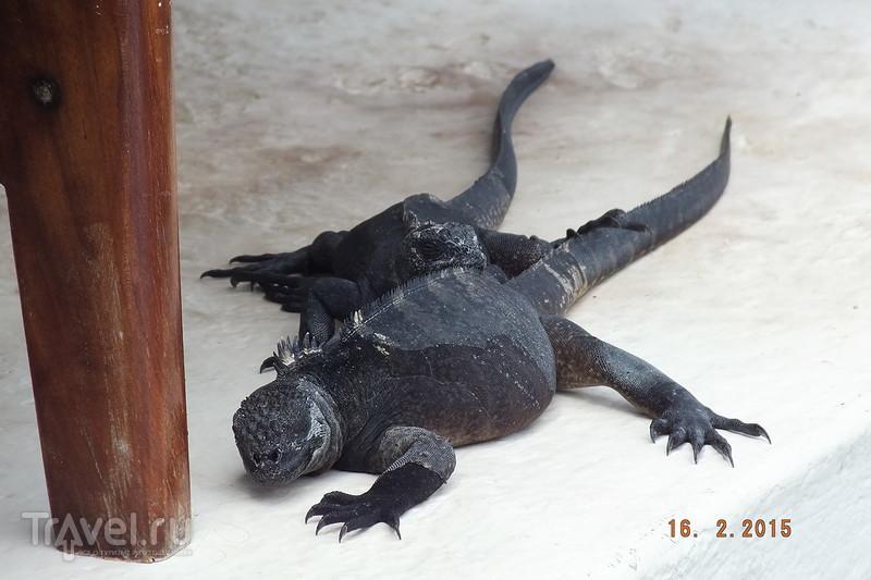 Галапагосы. Остров Санта-Крус. Город Пуэрто-Айора / Эквадор