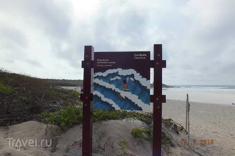 Галапагосы. Остров Санта-Крус. Пляж Тортуга Бэй