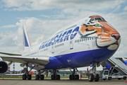 """Полосатый рейс: самолет """"Трансаэро"""" раскрасили под тигра"""