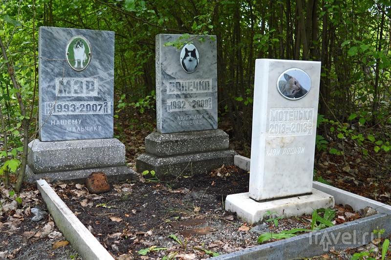Кладбище домашних любимцев / Россия