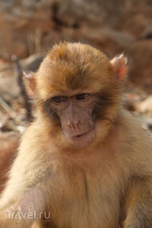 Крит, зоопарк Amazonas Park / Греция