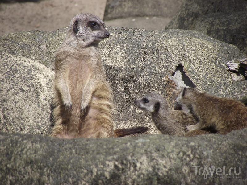 Варшава: зоопарк